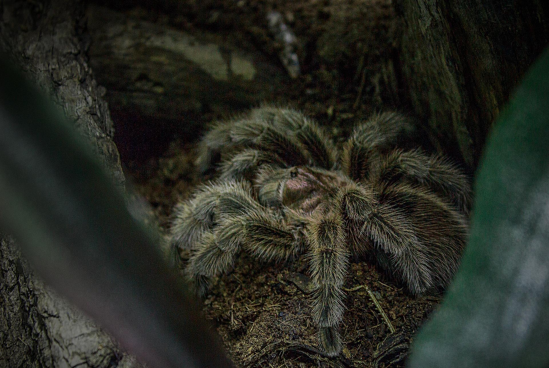 spider-854065_1920