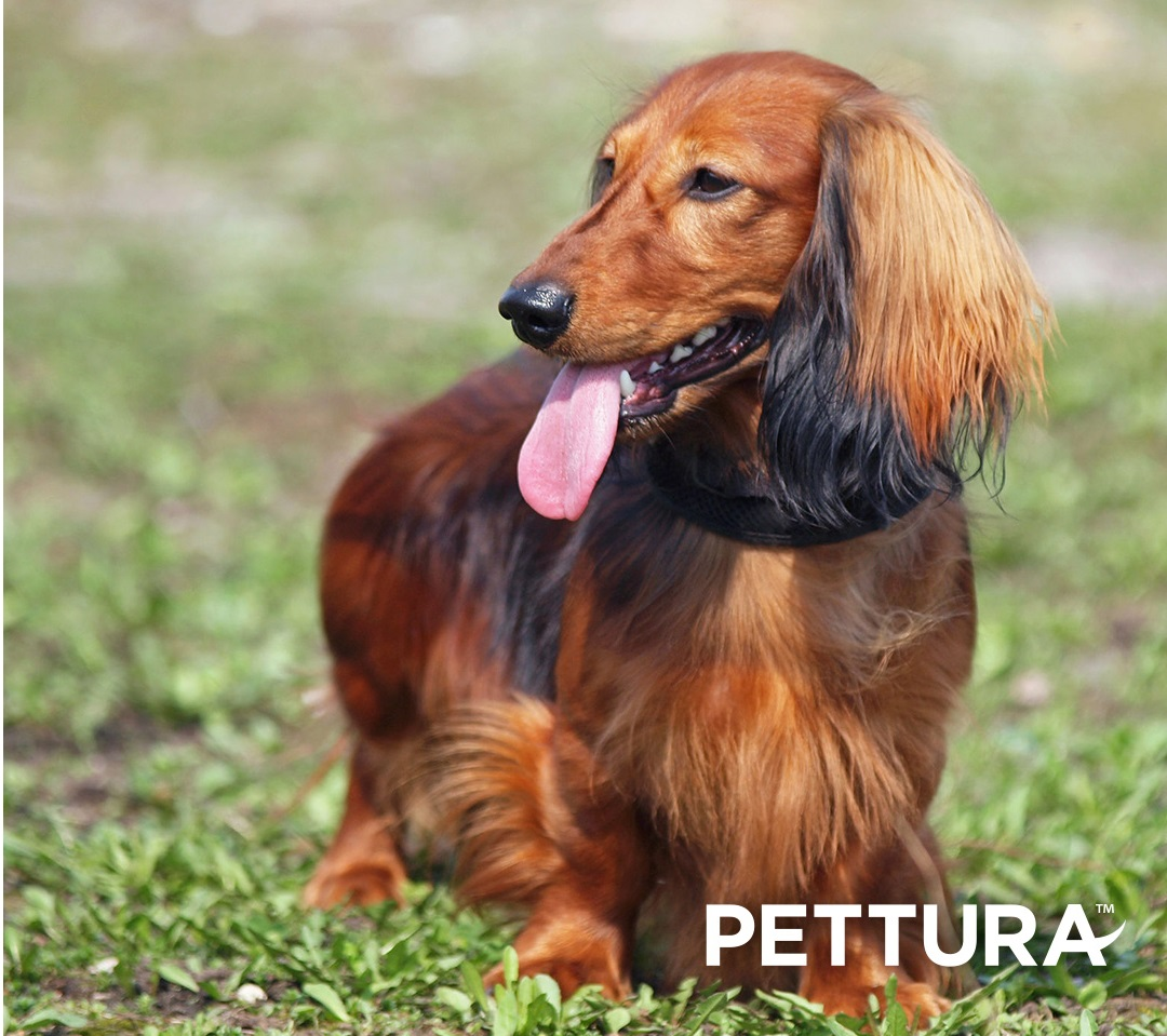 Pettura – A Healthy Dog Means a Happier You