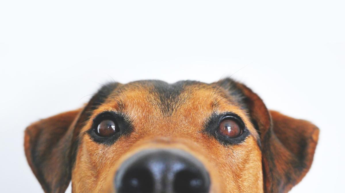 13 Fun Pet Facts