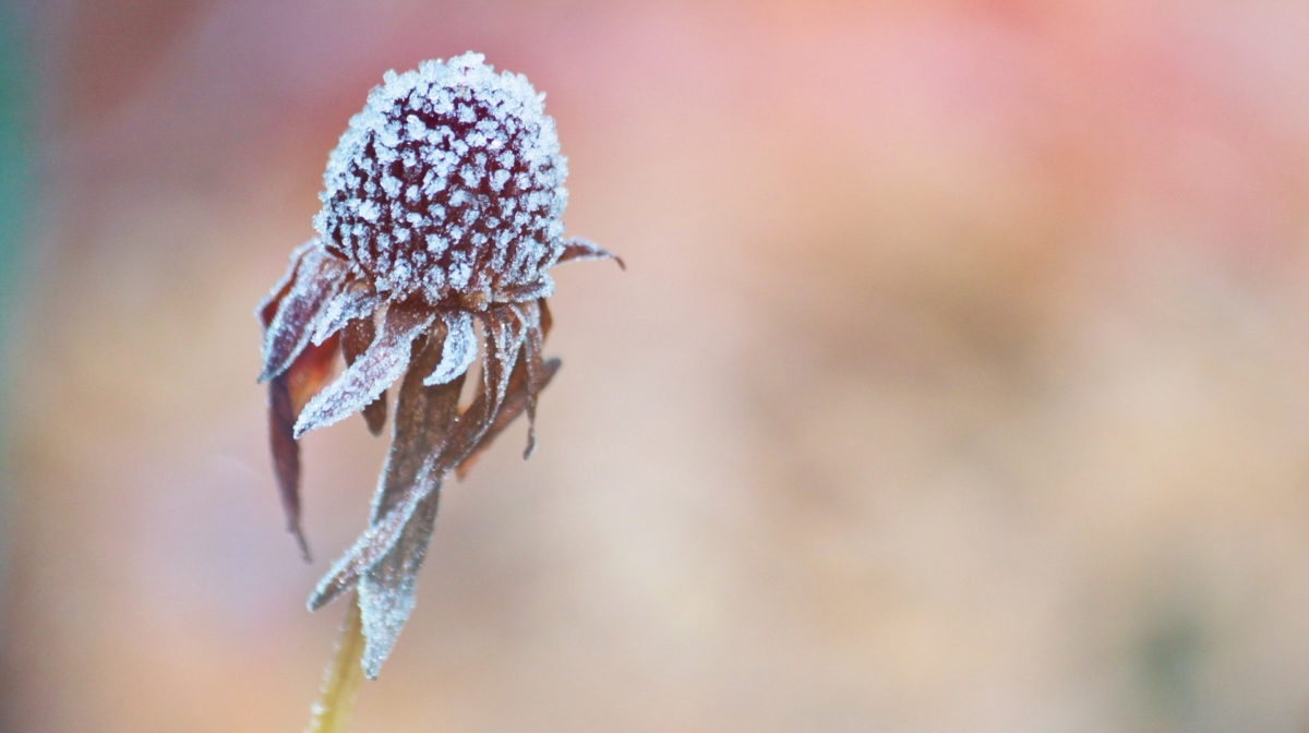 Caring for Your Garden in Winter