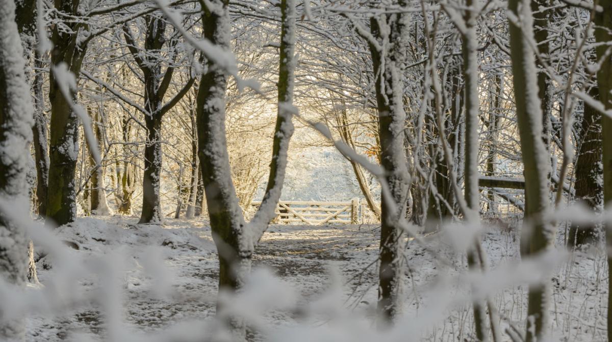 Find Your Own National Trust Winter Wonderland