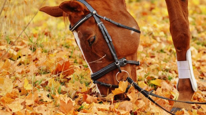 5 DIY Toys for Your Horse