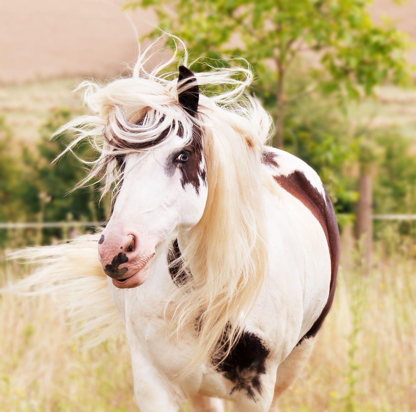 4 Ways to Braid Your Horse's Mane