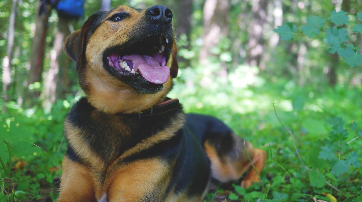 Tricks for Treats – 4 Tricks to Teach Your Dog