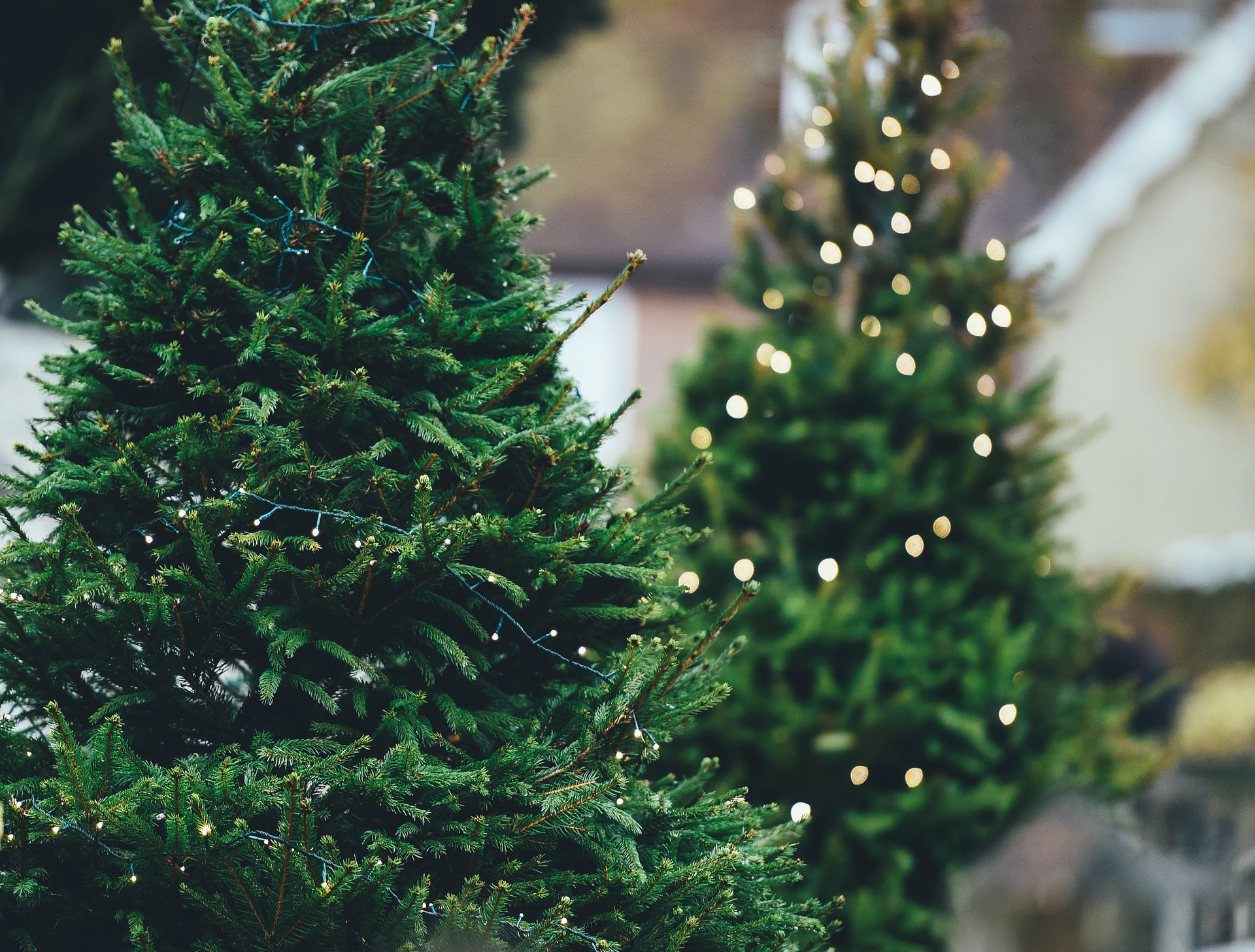 The Eternal Christmas Battle – Real Tree vs Artificial Tree