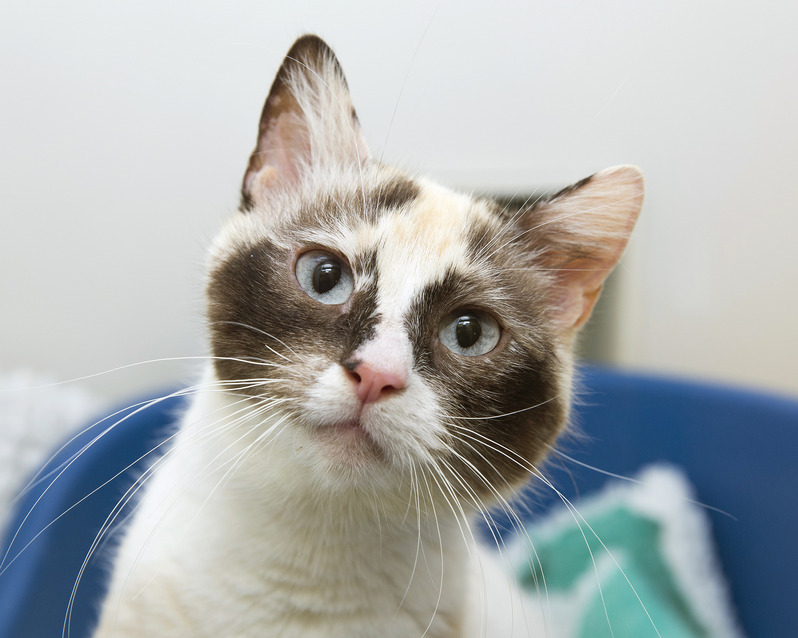 Cats Also Need Care Over Christmas