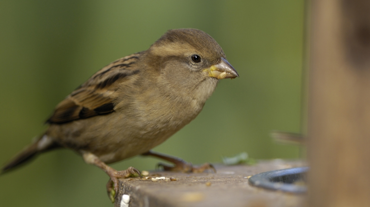 The RSPB Tells Us Why We Should Take Part in The Big Garden Birdwatch