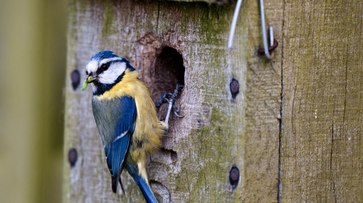 Nest Boxes: What Are They And Which Ones Are Best?