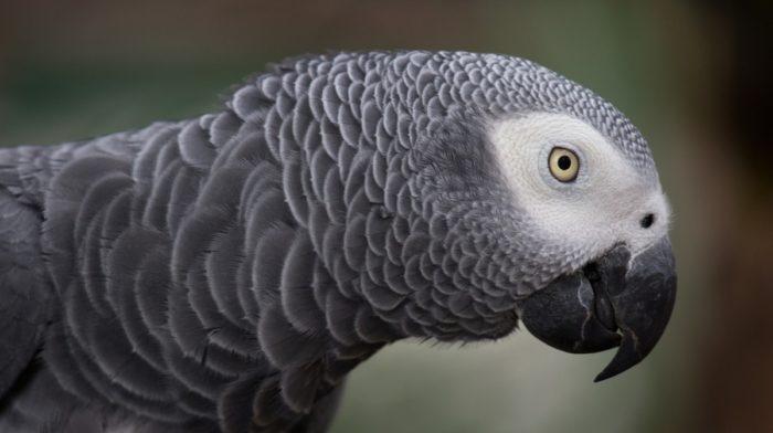 CoP17: CITES Updates For Endangered Species