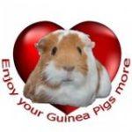 Guinea Pig Welfare