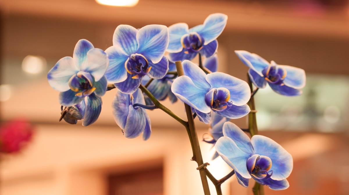 How to Look after an Orchid