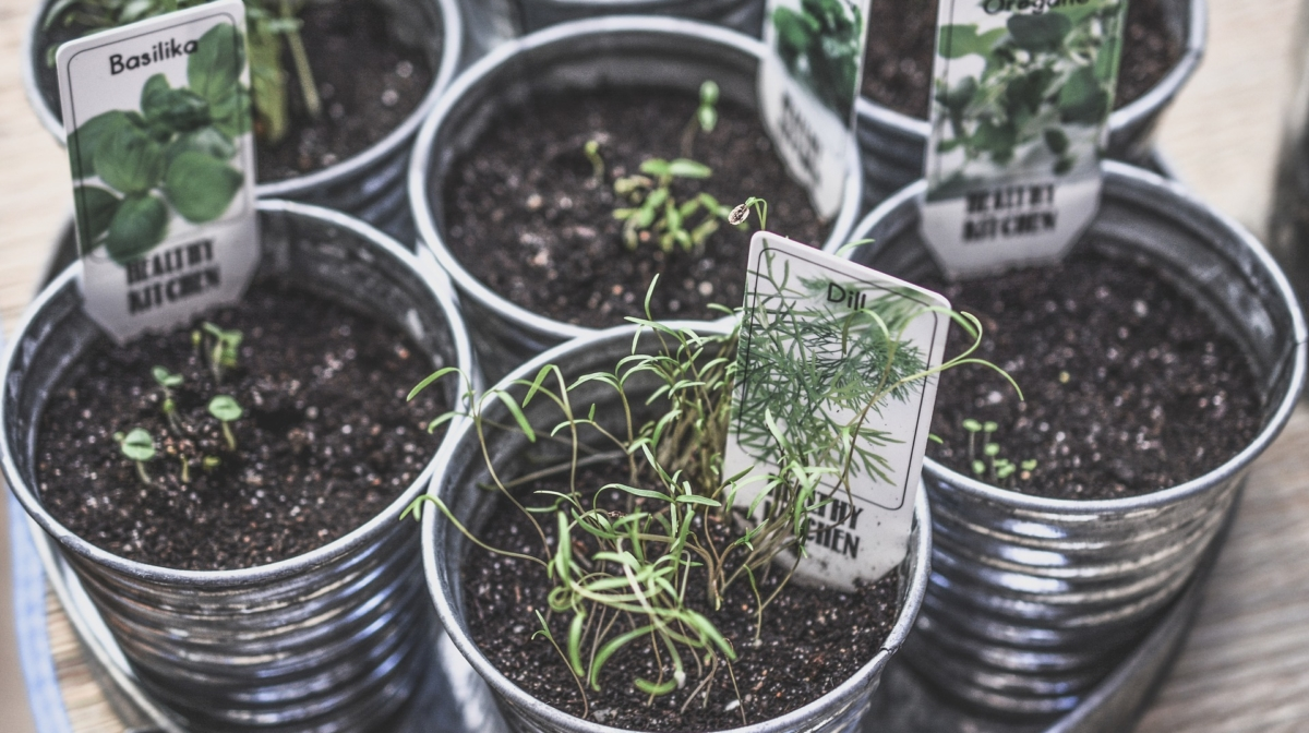 What are the benefits of herbs and how to use them