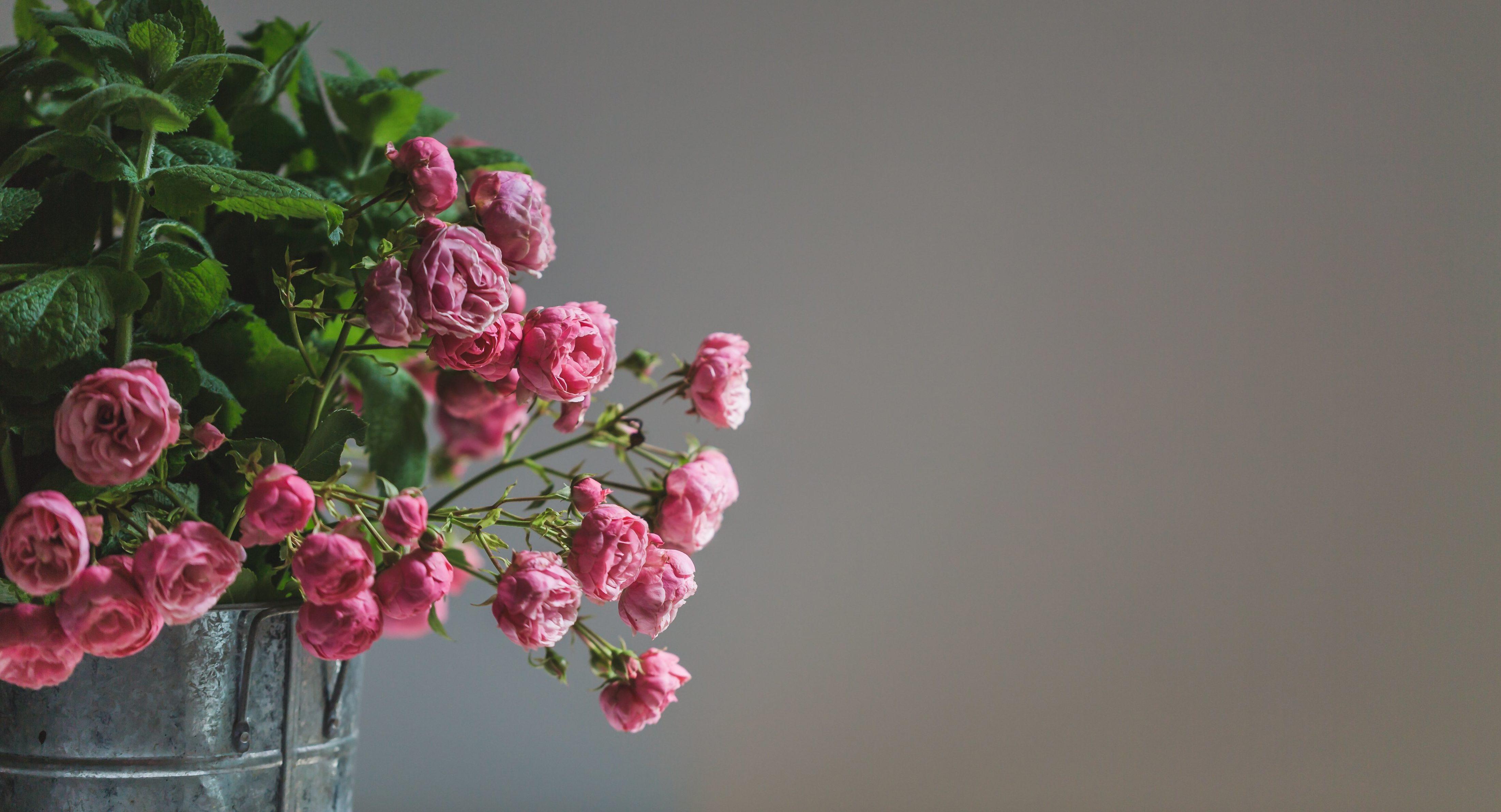cut flowers roses hygge in spring