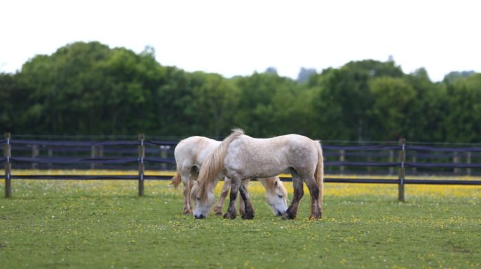 Treats Safe for Horses, and What to Avoid