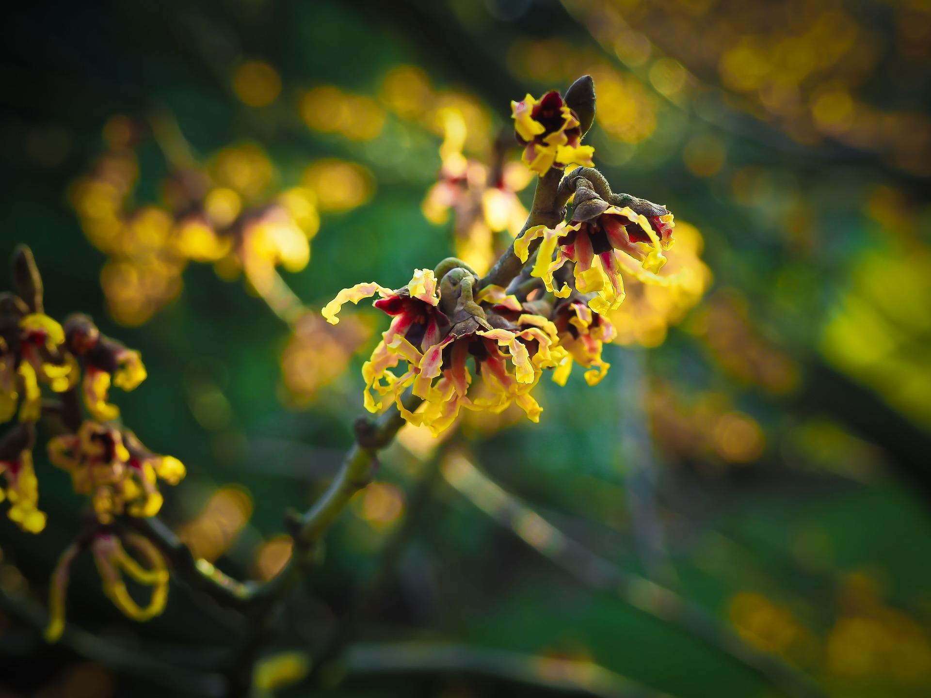 blossom-1210668_1920