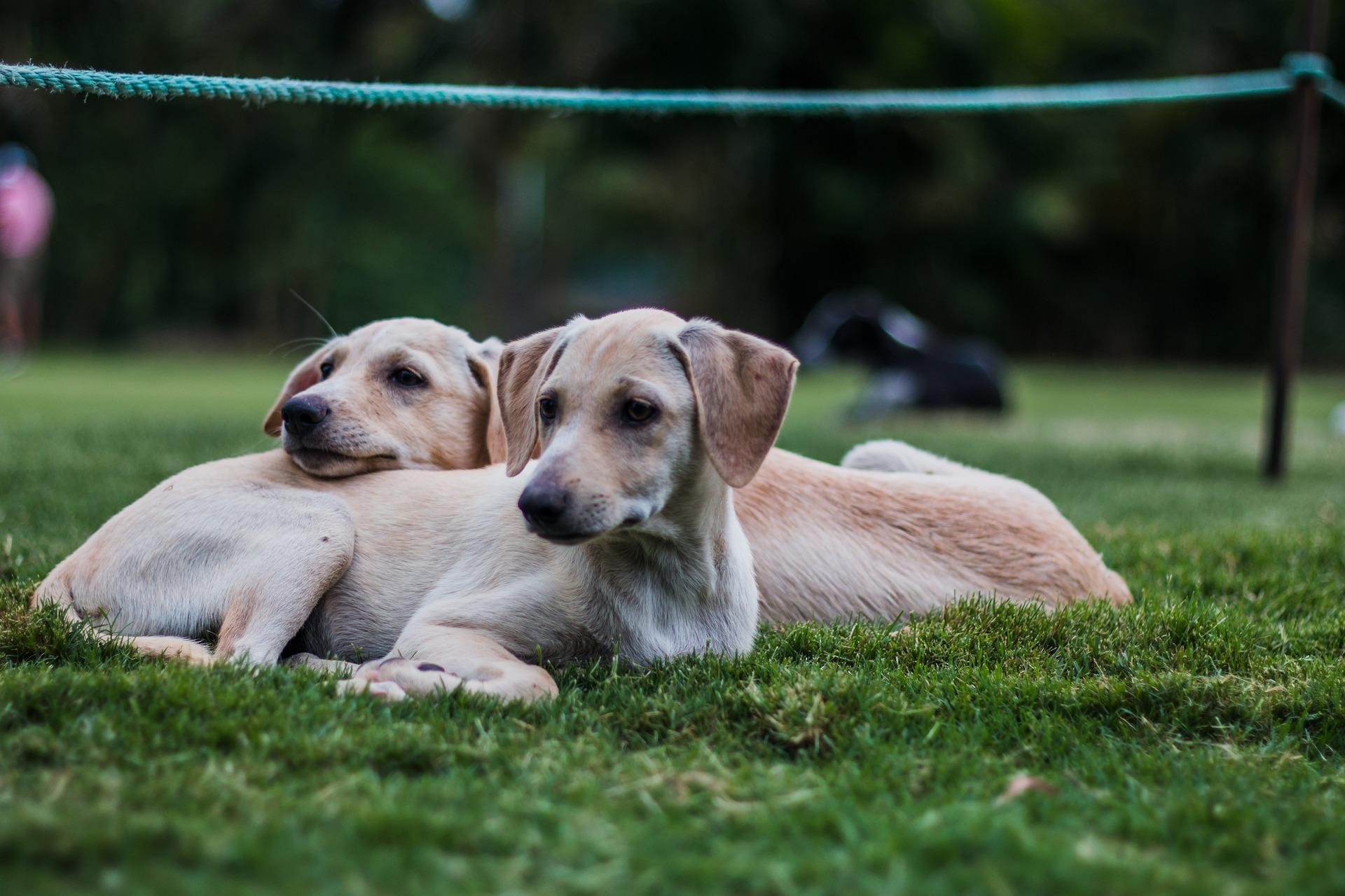 puppy-2391465_1920