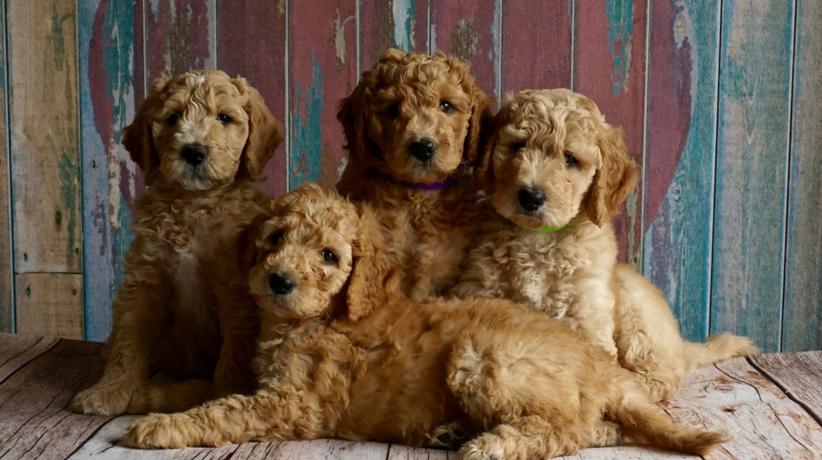 Buying a Puppy?   Checklist to Help You Find the Right
