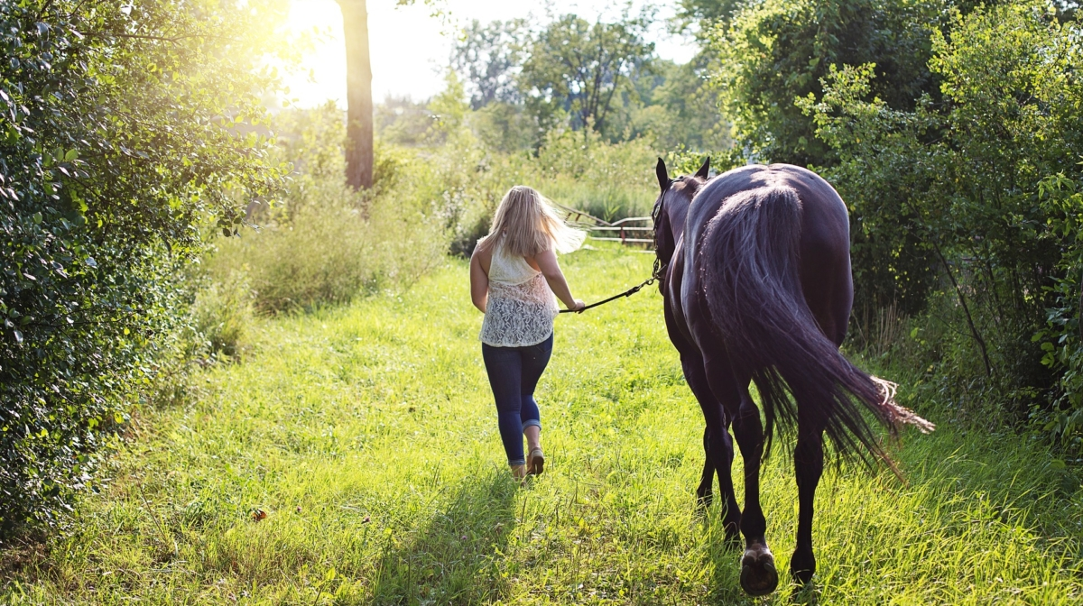 What Do I Need to Own a Horse? | A Beginner's Guide