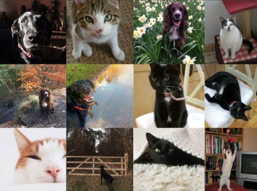 #PrelovedPets - Meet the Preloved Team's Pets