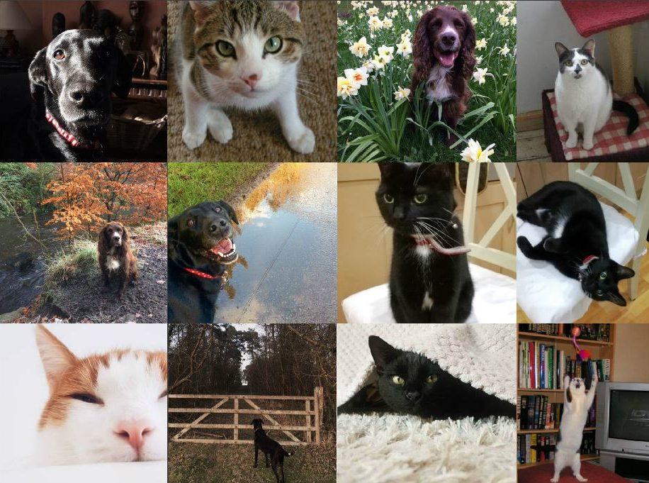 #PrelovedPets – Meet the Preloved Team's Pets