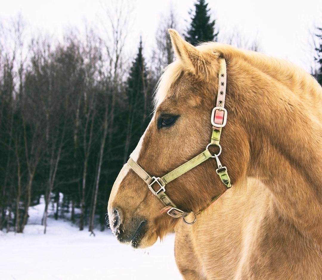 Round-up: Winter Animal Care