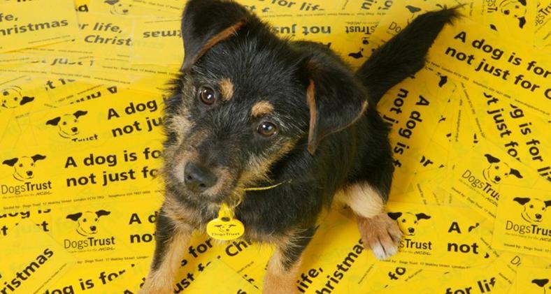Preloved Advent Day 19: Dog's Trust