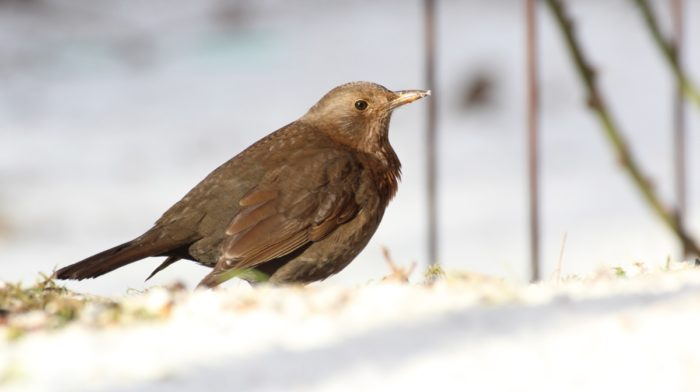 Preloved and the RSPB Big Garden Birdwatch