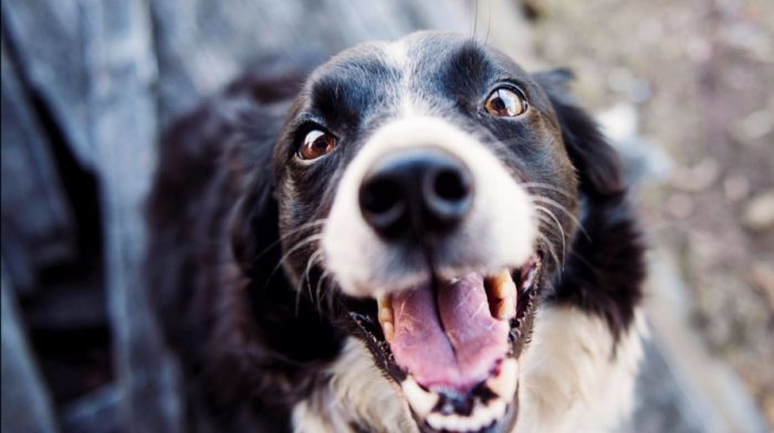 Why Your Dog is the Best Bet this Valentine's Day