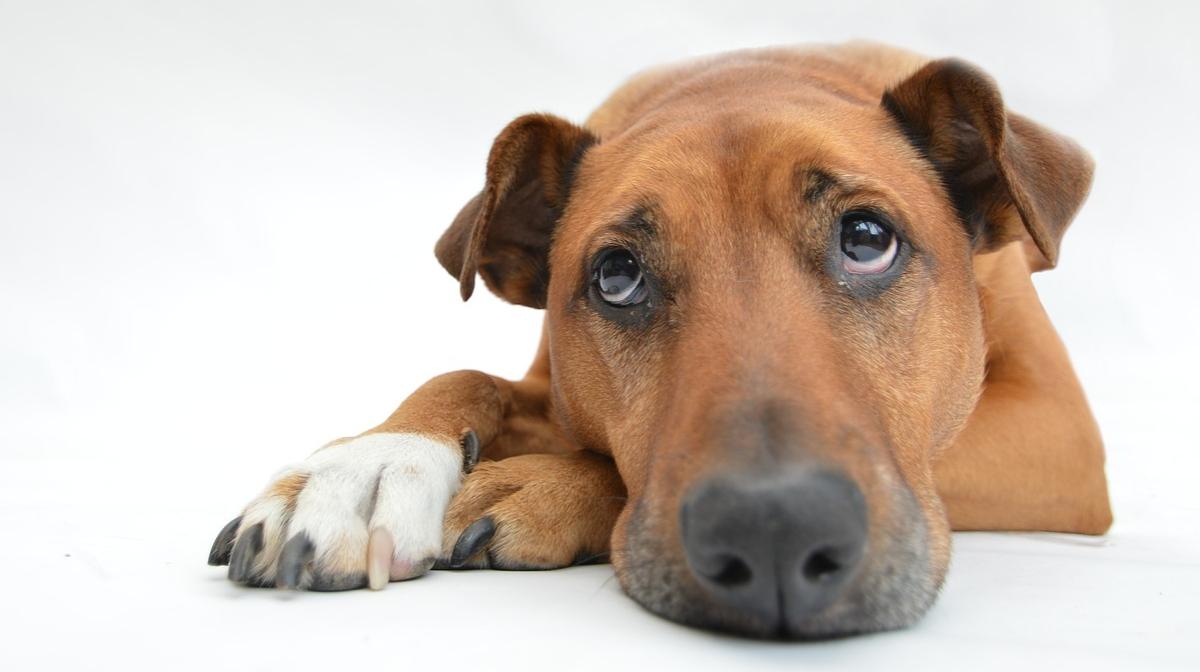 National Pet Month: Celebrating Responsible Pet Ownership