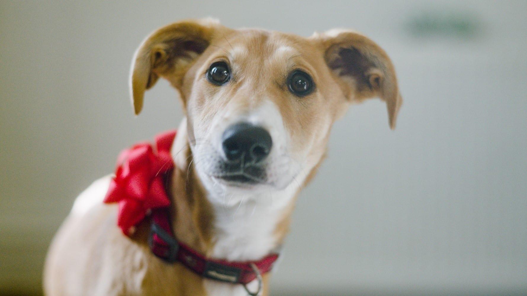 Preloved Advent Charity Spotlight Week 2: Dog's Trust
