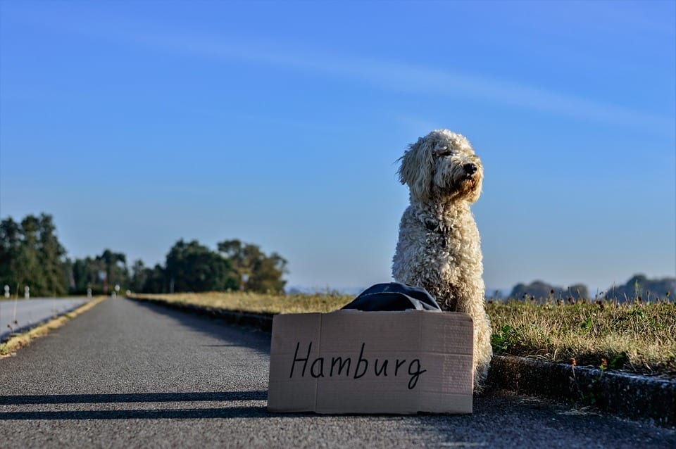 5 Tips For Travelling With Your Dog