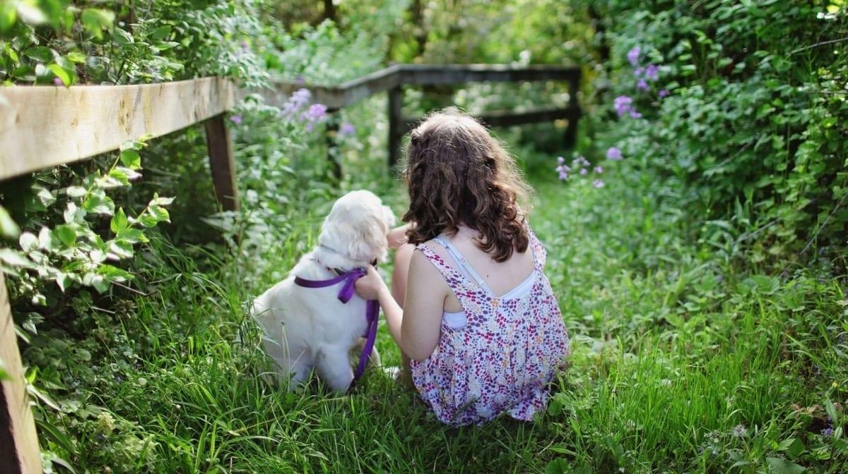 Top 12 Child-Friendly Dog Breeds