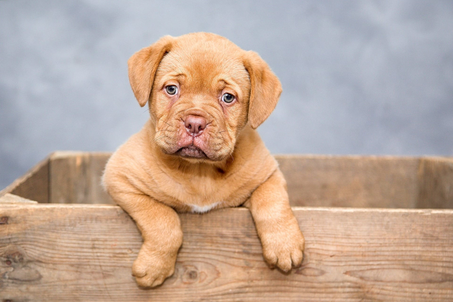 Buying A Puppy? | Here's What You Need To Know
