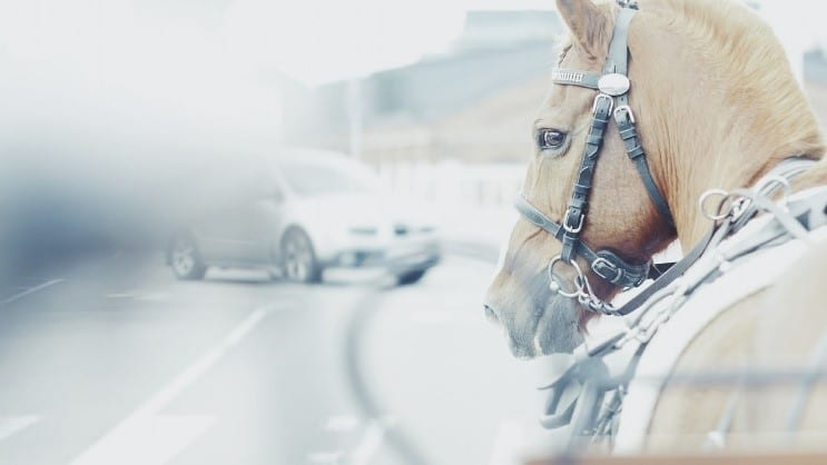Horse riding on road