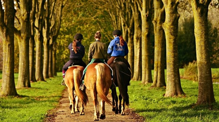 Top 5 horse riding tips on Equestrian Safety Day