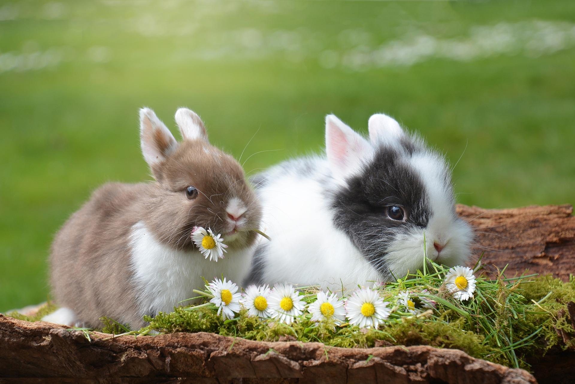 bunny and daisy