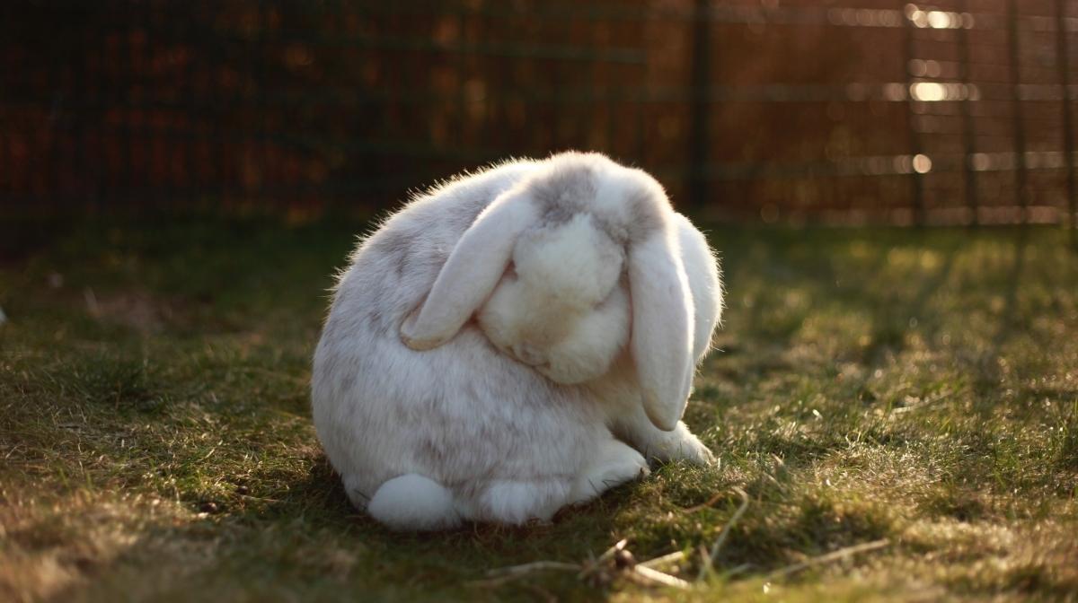 DIY Treat Ideas For A Happy Rabbit