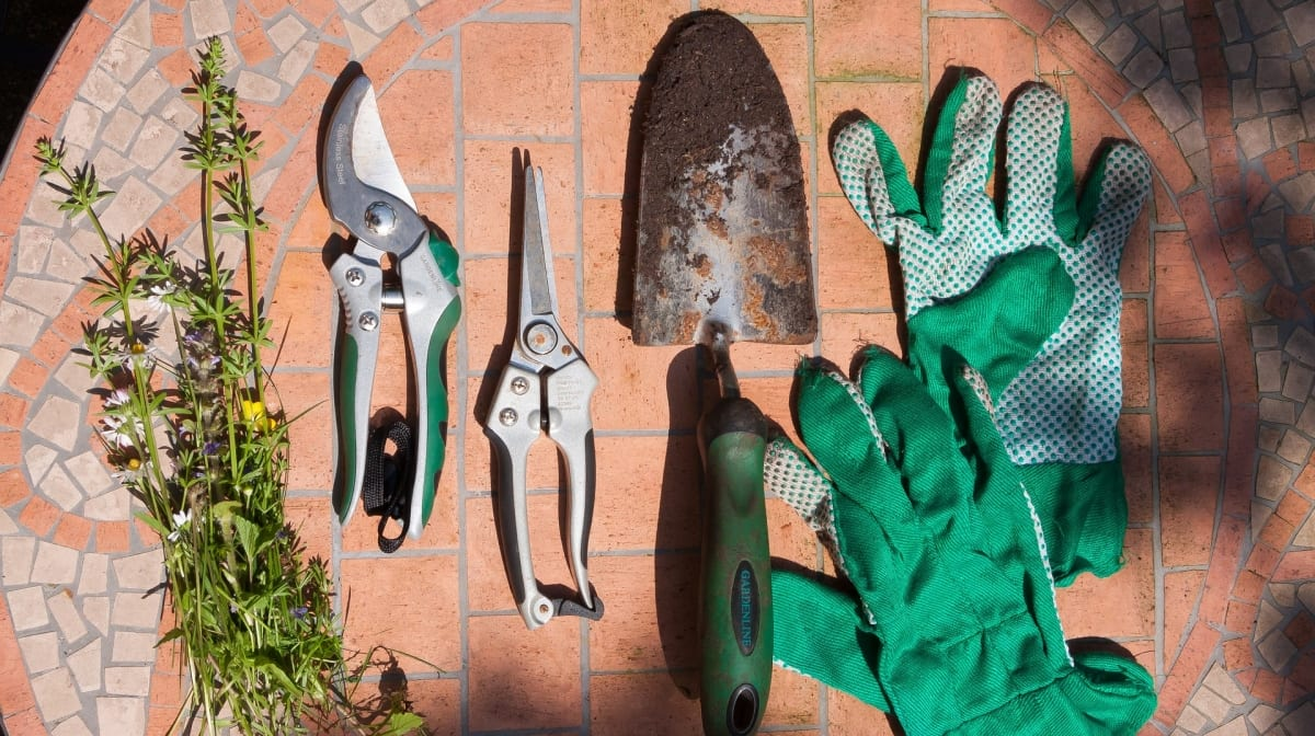 8 Essential Tools Every Gardener Needs
