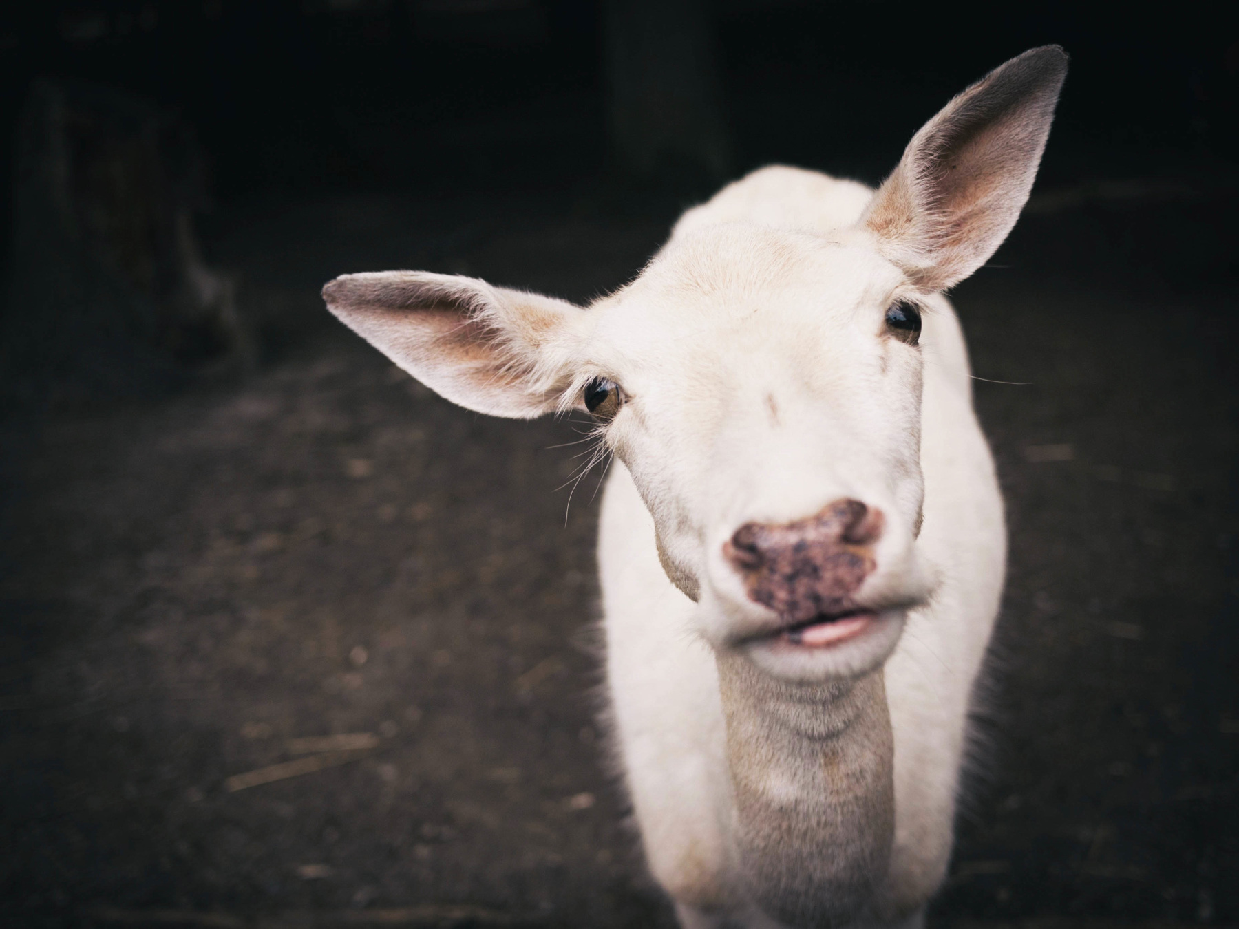 Food-Trends-2017-Goats-Meat