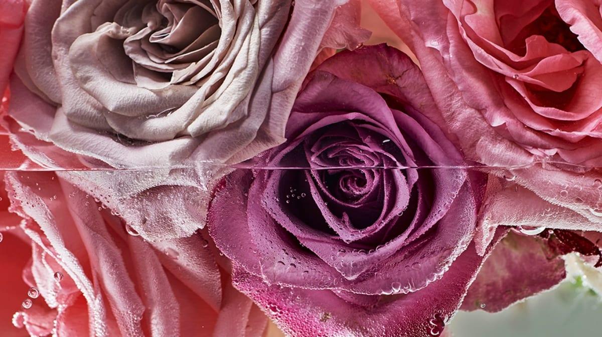 Produits à base d'eau de rose: quels bénéfices pour la peau ?