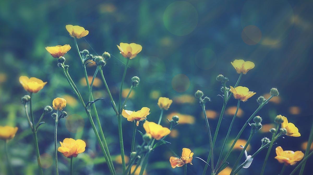 Pantone Spring Colour: Buttercup Yellow