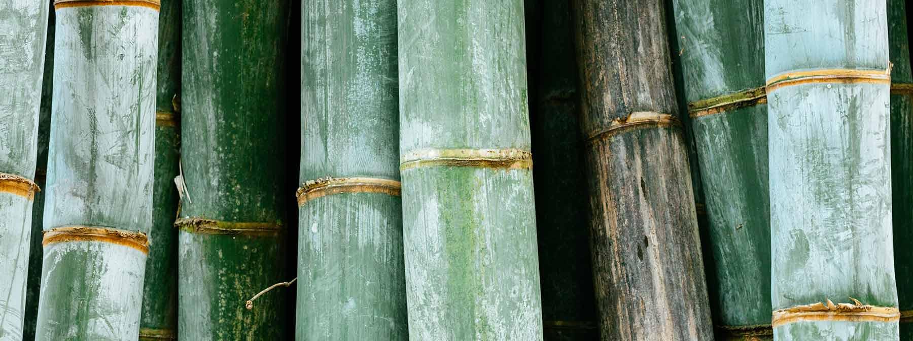 Beauty Benefits Of Bamboo