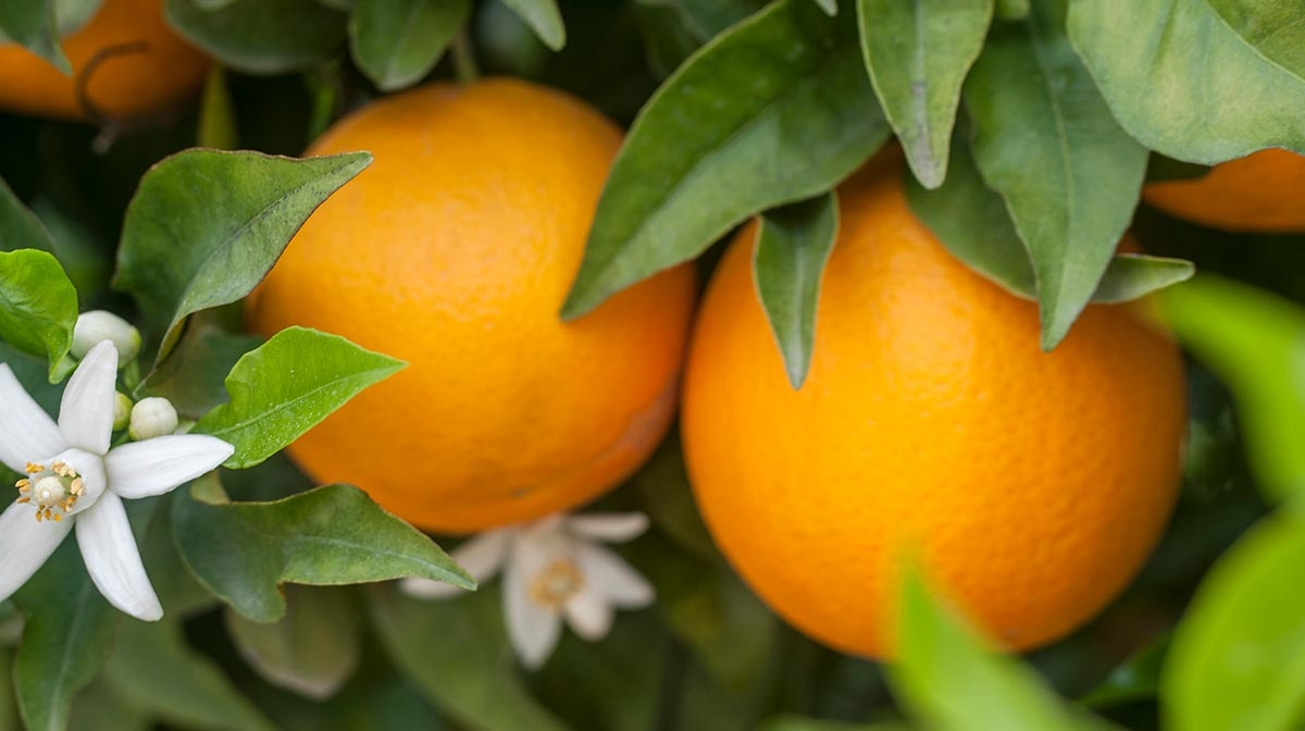 The Benefits Of Oranges In Skincare