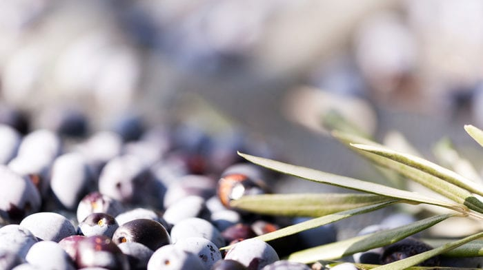 What are the benefits of olive oil for hair?