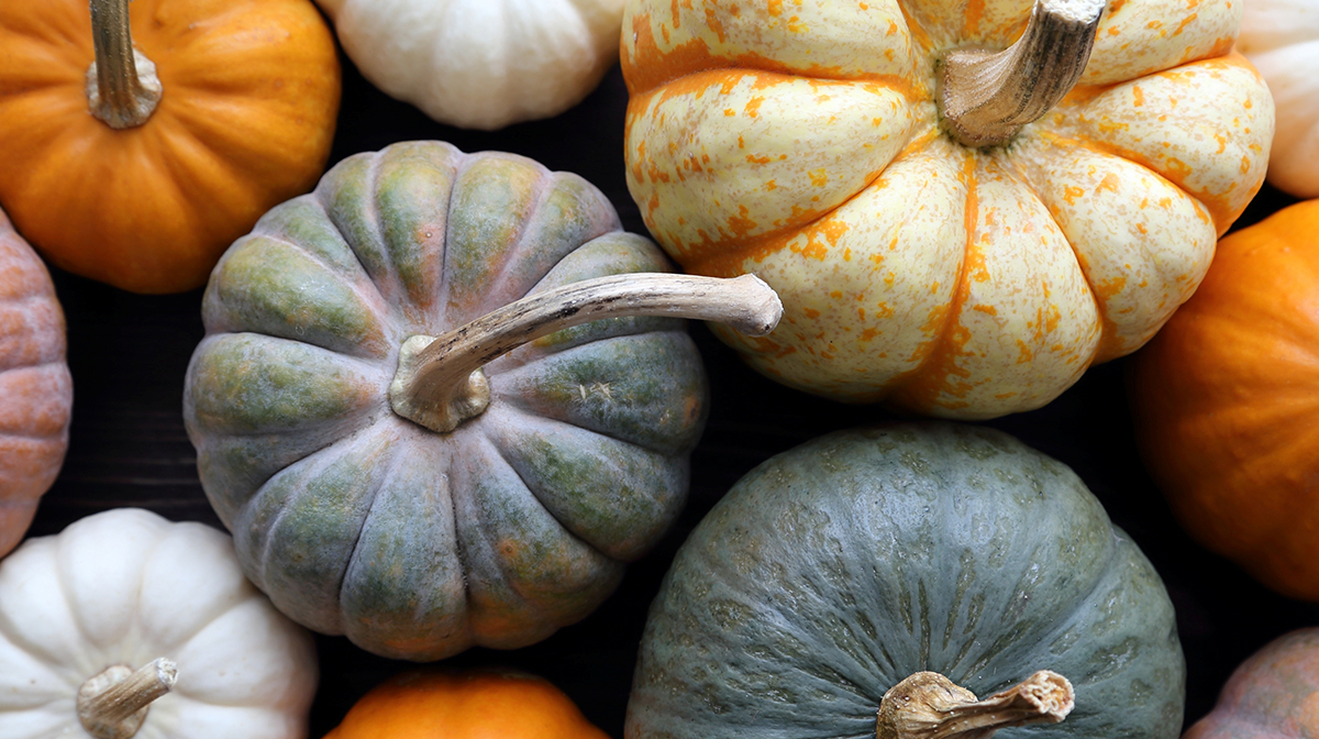 5 Pumpkin Infused Products You Need This Season