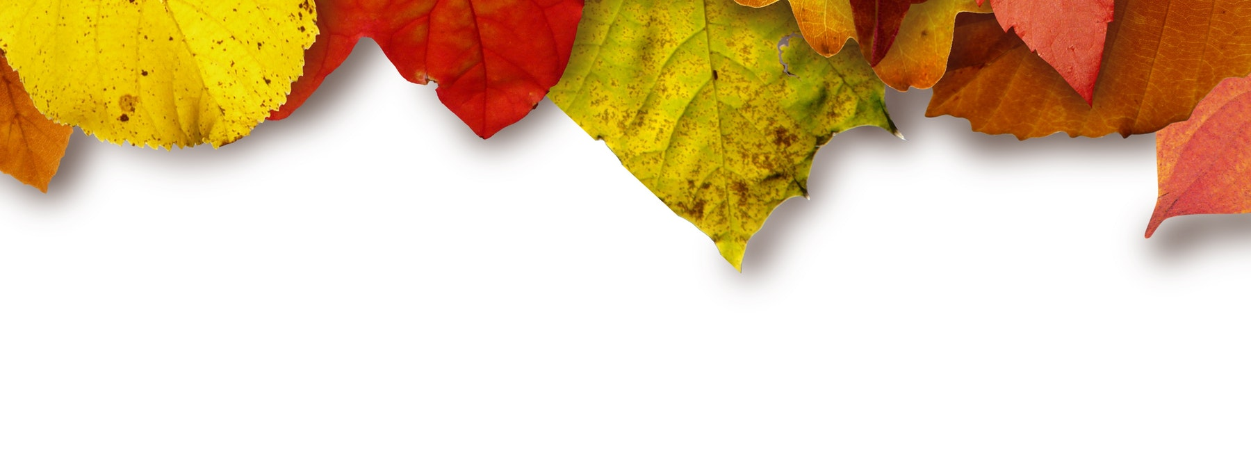 leaves on the ground in the autumn winter warmers