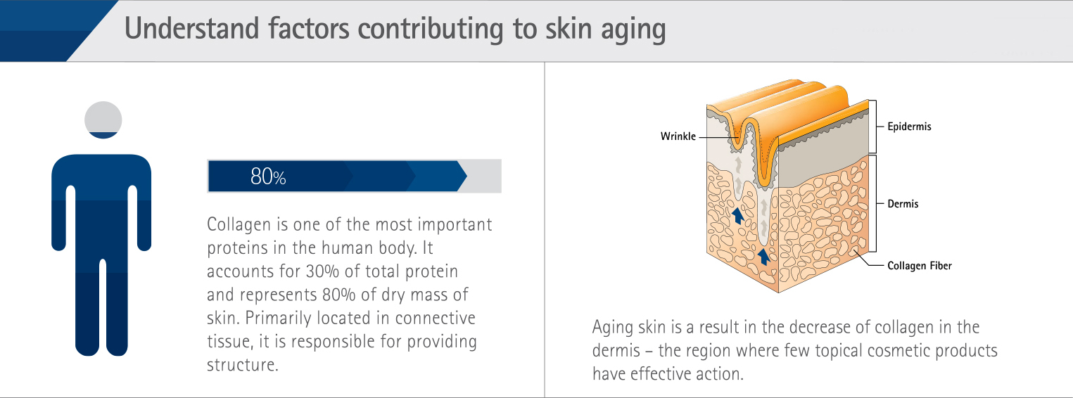an infographic showing the role of collagen in the skin