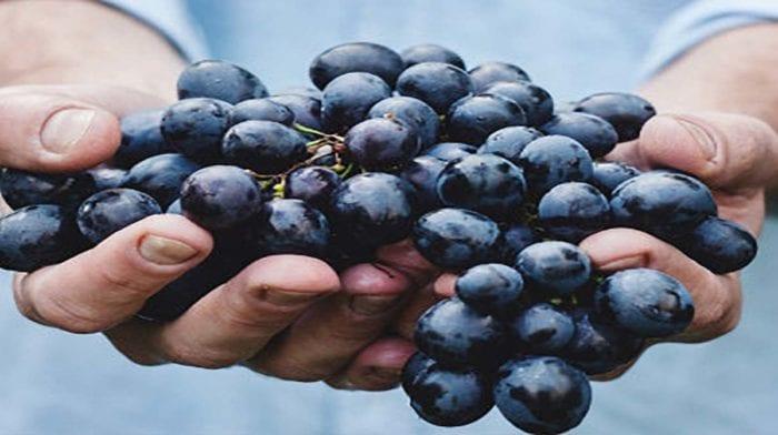 Εκχύλισμα σπόρων σταφυλιού | Πλεονεκτήματα