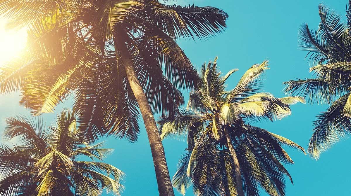 Tag der Tropenwälder: Nachhaltige Produkte ohne Palmöl