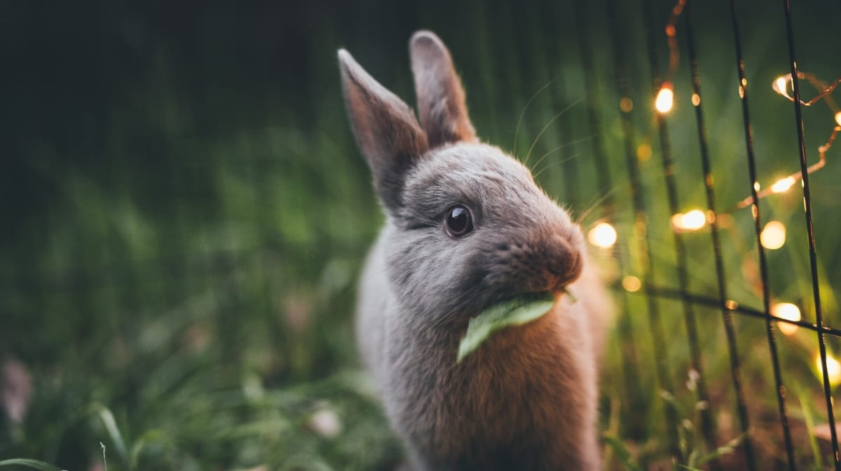 Tierversuchsfreie Kosmetik: unsere liebsten Marken